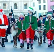 Reindeer parade and reindeer sleigh pull hire display teams