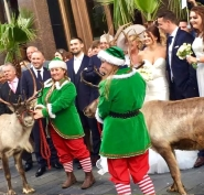 Reindeer Hire for weddings